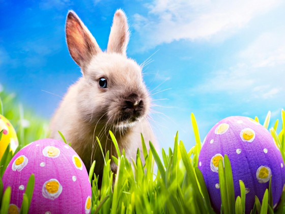 Happy-Easter-Rabbit-Egg-Pics